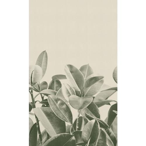 Rubber Plant 2018